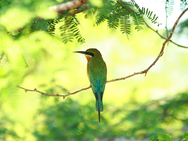 Best things to do in Bundala - Places to Visit in Bundala - Attractions in Bundala - Top Things to do in Bundala - Bundala experiences - Leisure places in Bundala - Bundala National Park - Bird Watching in Bundala National Park - National Parks in Sri Lank