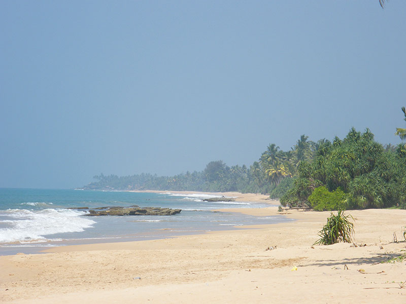 Best things to do in Kosgoda - Places to Visit in Kosgoda - Attractions in Kosgoda - Top Things to do in Kosgoda - Kosgoda experiences - Leisure places in Kosgoda - Turtle Watching in Sri Lanka - Kosgoda Turtle Watching