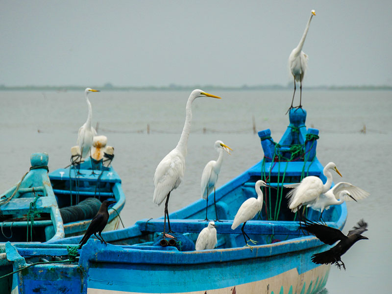 Best things to do in Mannar - Places to Visit in Mannar - Attractions in Mannar - Top Things to do in Mannar - Mannar experiences - Leisure places in Mannar - Mannar Bird Watching