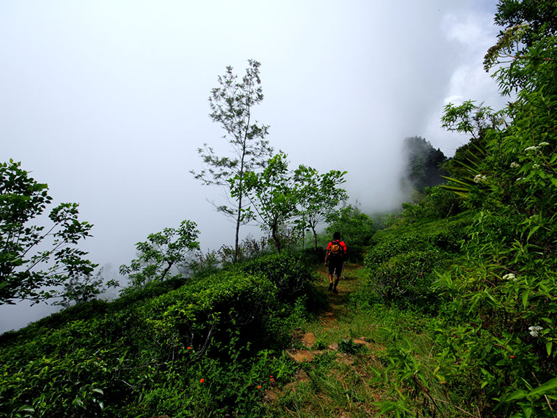 Best things to do in Ohiya - Places to Visit in Ohiya - Attractions in Ohiya - Top Things to do in Ohiya - Ohiya experiences - Leisure places in Ohiya - Ohiya Trekking - Trekking in Ohiya