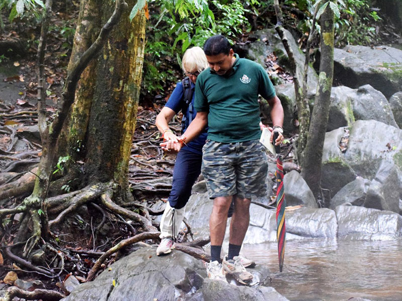 Best things to do in Sinharaja Rain Forest - Trekking in Sinharaja - Sinharaja Rain Forest - Sinharaja Trekking Trips - Trek in Sinharaja - Bird Watching in Sinharaja - Sinharaja Forest Reserve