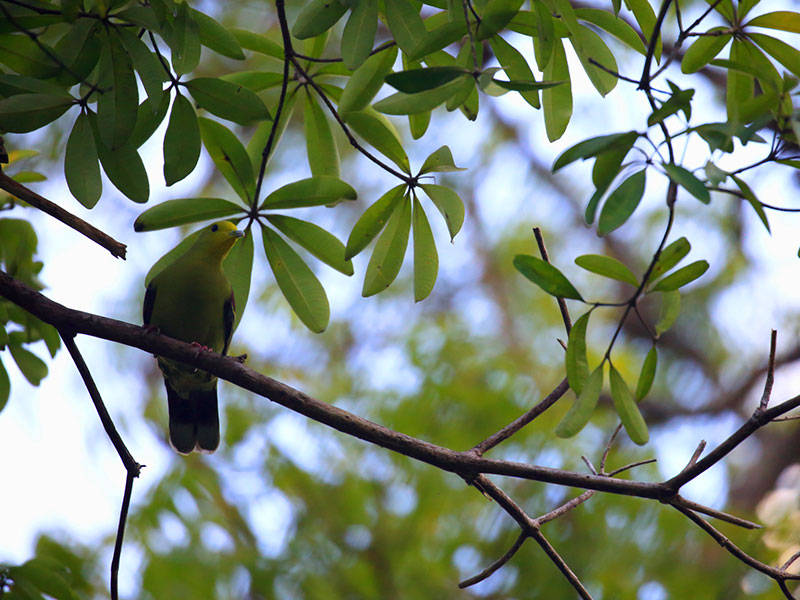 Sri Lanka Birds Watching Holidays, Safari Tours Sri Lanka, Birds Watching Tours in Sri Lanka, Sri Lanka Safari Tours, Safari Tour packages in Sri Lanka, Safari Holidays in Sri Lanka, Birds Watching Holidays Sri Lanka, Sri Lanka safari and Birds Watching Tours and Holidays in Sri Lanka