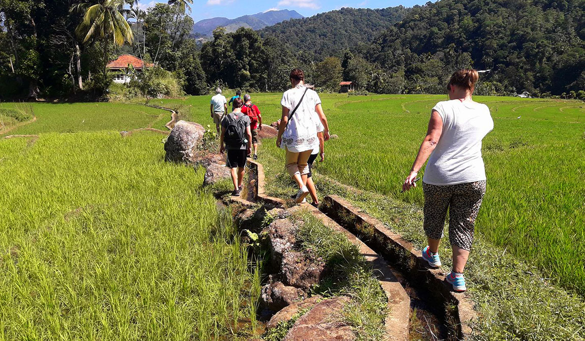Polwaththa Eco Lodges - Trekking, Nature - Culture in Kandy - Sri Lanka - Polwaththa Eco Lodge, Kandy - Best Hotels in Kandy - Eco Lodges in Kandy - Eco lodge near Kandy