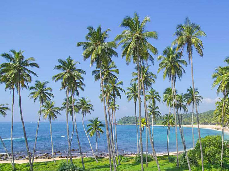 Tour Opeators in Sri Lanka - Travel Agents in Sri Lanka - Best Tour Operators in Sri Lanka
